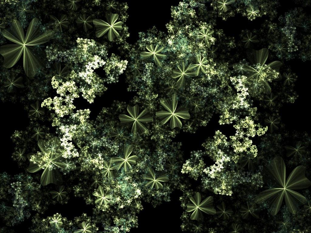 shamrockbushes