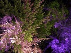Ornamental Ferns Site