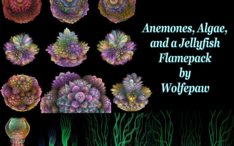 Anemones, Algae, and a Jellyfish Flamepack Image