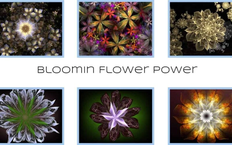 Bloomin Flower Power - By Michael Bourne and Mi Mi Image