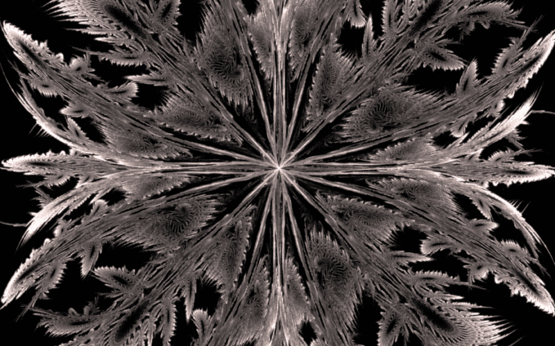 Feathery Stars Image